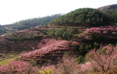 初中语文:桃花源记练习题